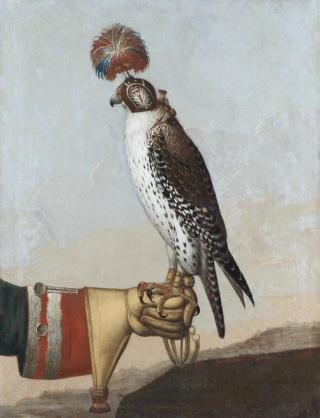 Gyrfalcon 1759 wiki