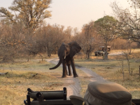 Elephat Road Block