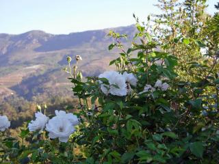 Stellenbosch flowers