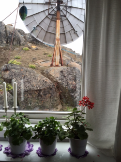 Greenland hostess window