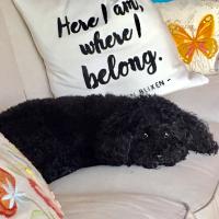 Stella on sofa