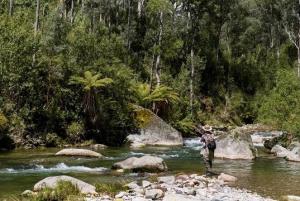 Rainforest&River