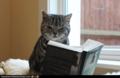 Bookreadingcat