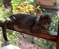 Smokey on the Railing