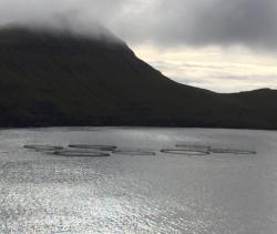 Fish farming in Faroes