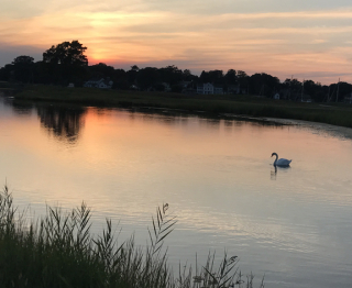 Golf swan