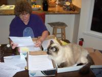 Cat helping 11