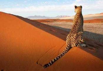Micato Namibia Leopard