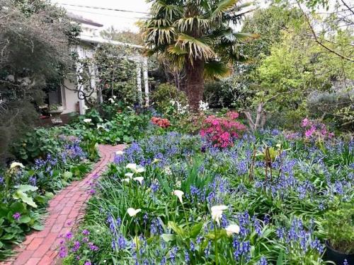 Moi's garden