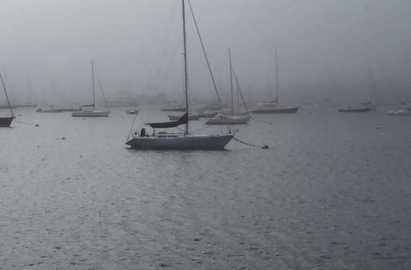 Misty Morning in Newport