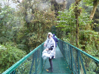 Cloud forest me