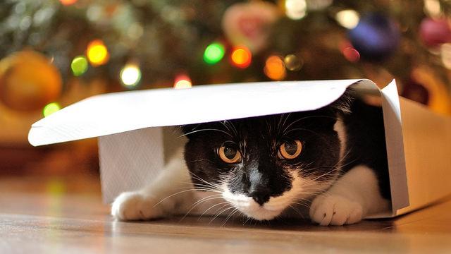Cat in box natalia photorights