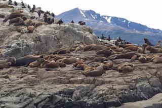 Tieray Del Fuego  Sea lions & Cormorants