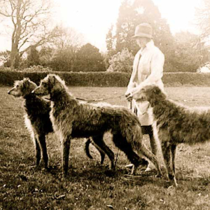 Scottish-Deerhound-History-05
