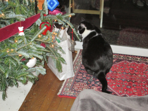 Christmas and cats 2014 001