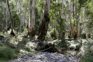 Australian_bush