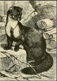Brehm's Life of animals 1895