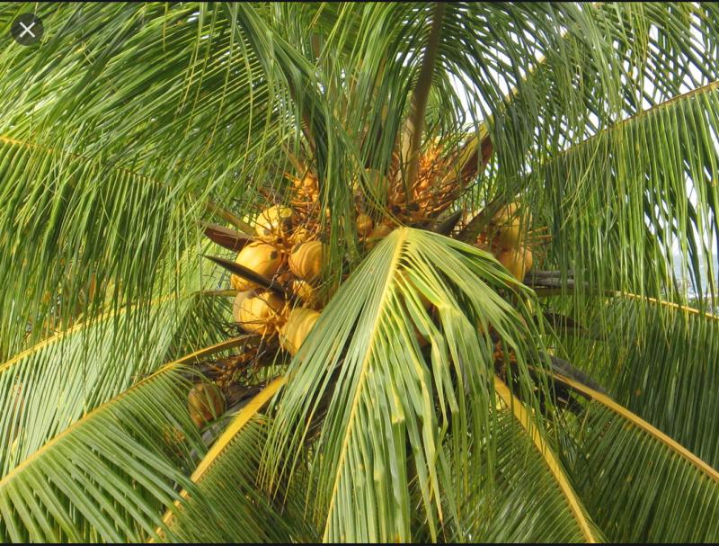 Palm wiki 2