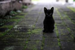 Ww cat