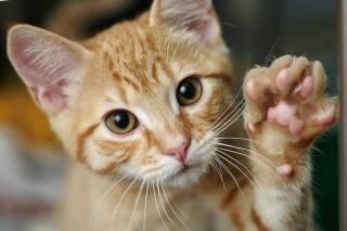 Cat'sPaw (1)