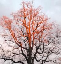 Andrea's tree
