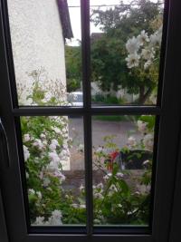 Rose window 1
