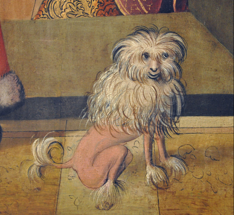 Dog depicted in lion cut  1505