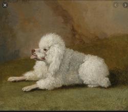 Jakob Philipp Hackert - Porträt eines Pudels (1795)
