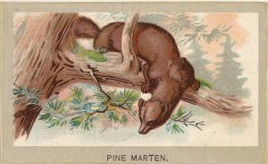 Cigarette card 1881