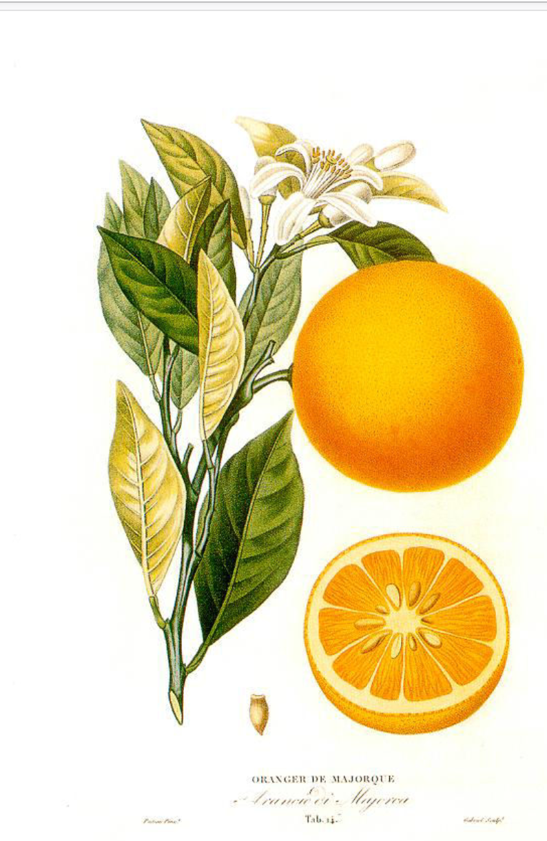 Ww orange