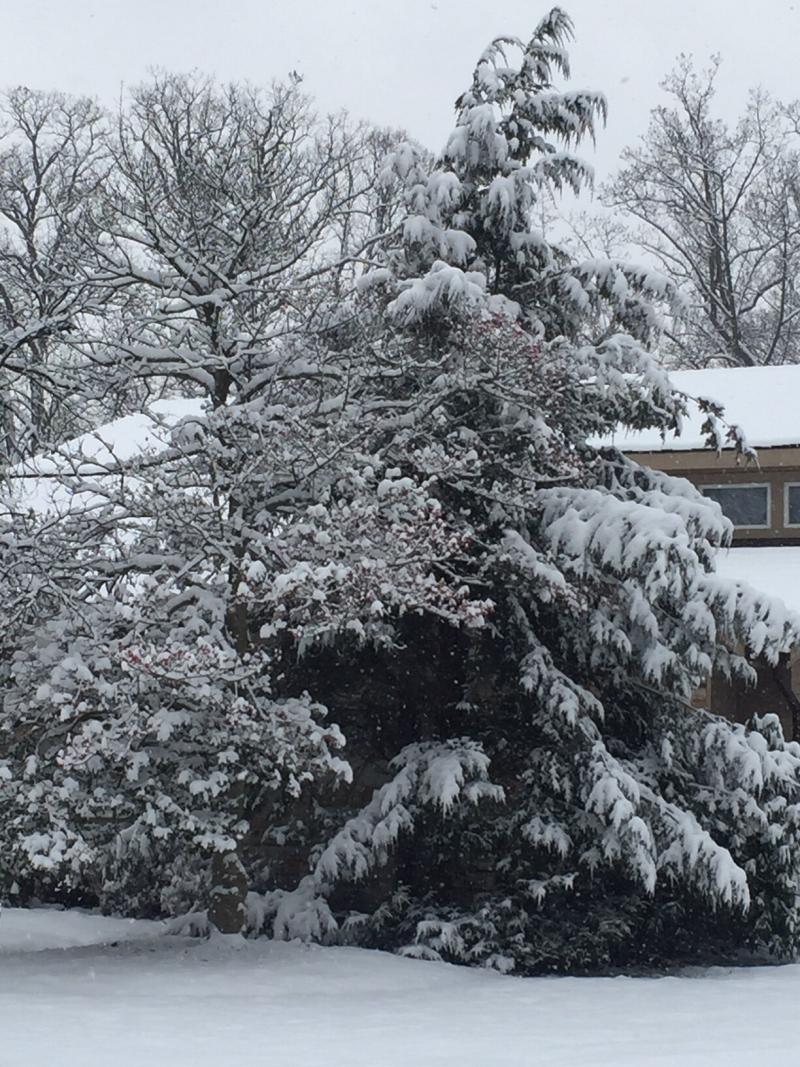 Snow 2018 (003)