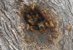 512px-Bee_hole