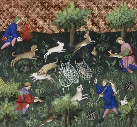 Thetford-rabbits