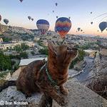 Nala and Hot Air balloons