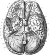 Brain_drawing