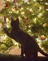 Christmastreecatm
