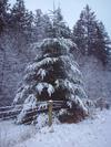Snowpasture12107003sm