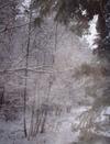 Snowpasture12107014sm_2