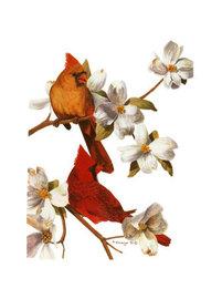 Cardinalprint