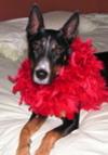 Annes_valentine_dog