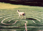 Labyrinth_deer