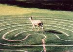 Labyrinth_deer