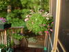 New_orleans_06_and_porch_049_2