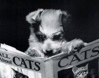 Reading_furda