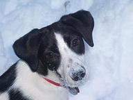 Snow_dog_1